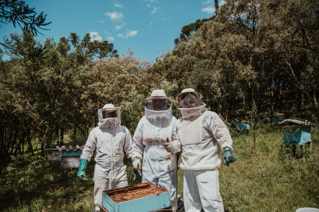 Other Insects And Challenges That  Harm Beekeeping