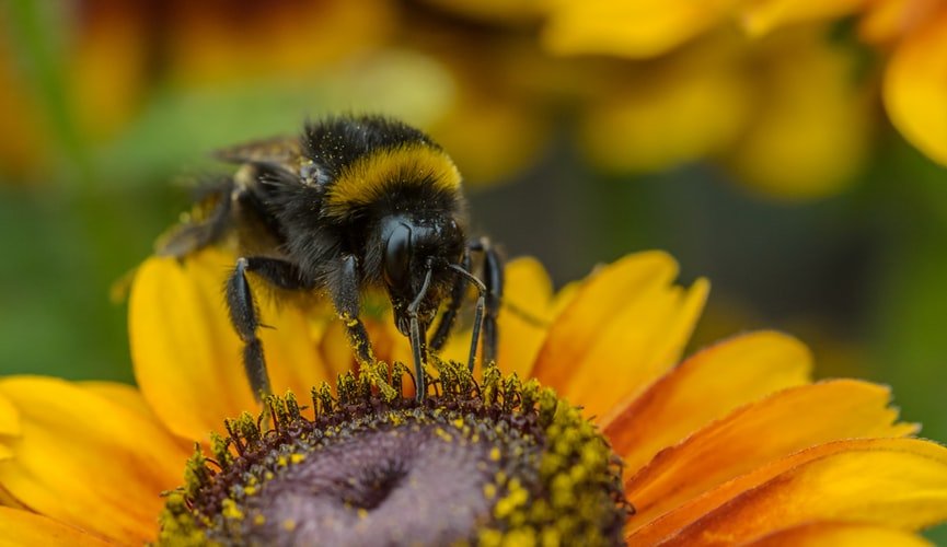 Bumblebee And Their Value in Market