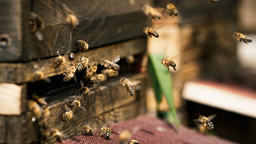 Training Credentials To Boost Beekeeping Endeavors