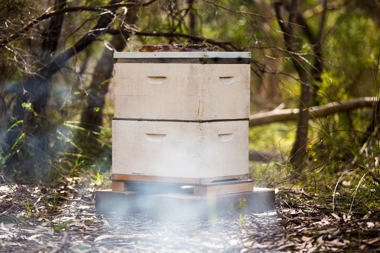Training Of Beekeeping: Process And Its Importance